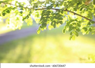 park leaf sun