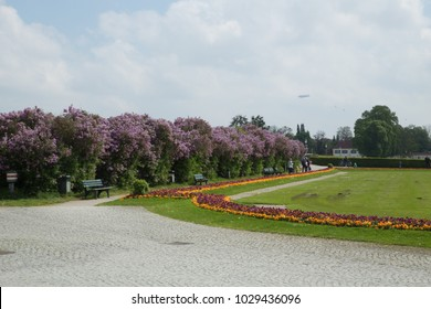 Park with Lilac Bushes and Yellow and Purple Flowers Next to Green English Lawn