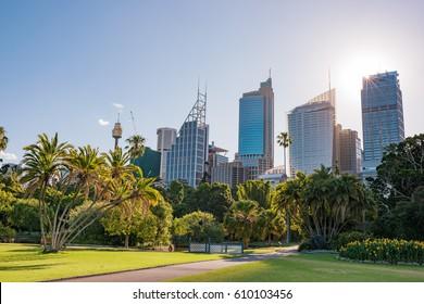 Park and modern cityscape with sun star. Royal Botanic Garden landscape with Sydney skyline. Australia