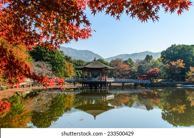 park in Nara Japan with red leaf