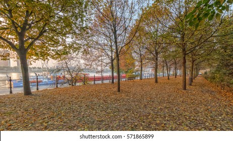 The park next to the harbor during the fall, The ground is covered with leaves, autumn is showing all its colors on this cold morning in Rotterdam.