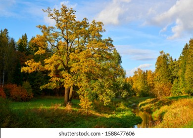 Park painted in yellow tones of autumn