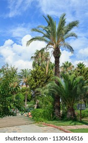 Park with palm trees in Kemer, Turkey