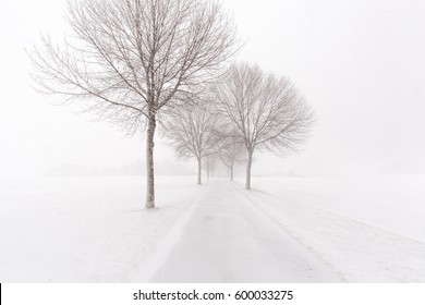 park path lined with trees during a snowstorm