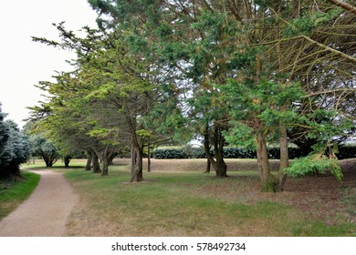 Park and path with pines