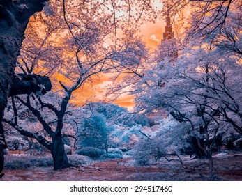 Park Path. Tokyo, Japan. The photo is extended infrared, all light is captured with a specially altered camera and is invisible to the human eye giving an ethereal quality.