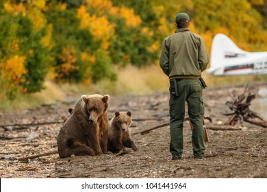 Park ranger trying to scare away mama-bear with her cubs.