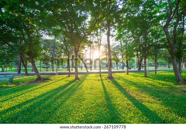 Park and recreation area in the city, Green field and tree