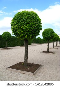 The park of Rundale palace in Latvia, Baltic country