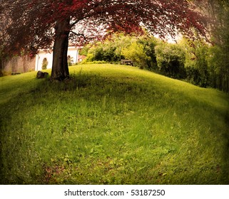 Park scenery with copper beech