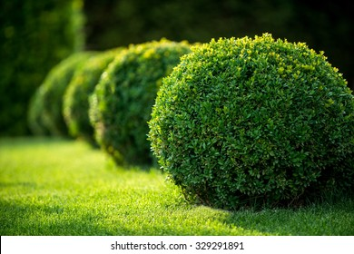 park with shrubs and green lawns, landscape design