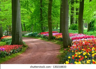 Park in The Spring.Tulips. Spring landscape.