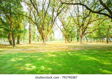 Park and the sun lighting behind a trees