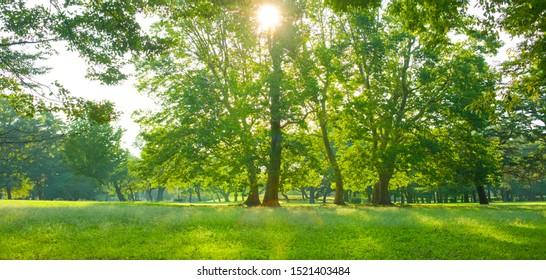 Park sunlight in the morning