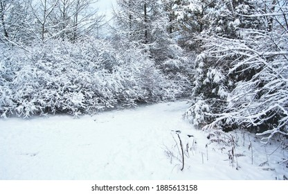 A park in Toronto after snowfall. Snow clings to the trees and transforms the scene into a winter wonderland. Taken on Christmas Day.