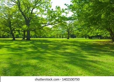 Park tree in the morning - Shutterstock ID 1402100750