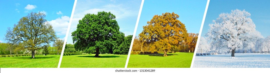 Park Tree Panorama - Four Seasons