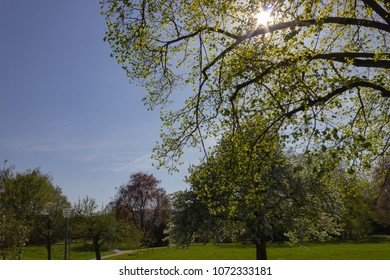 park trees and branches with foliage on sprintime sunny day in south germany happy historical city and warm southern winds