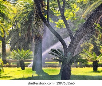 a park with tropical trees and green meadow in mid-summer, large sprinkler plants spray water to water all plants