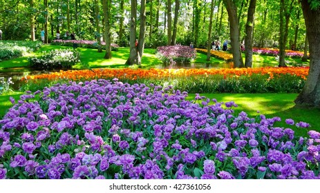 Park tulips in Holland