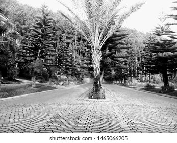 Park in a villa with neat and shady pine trees