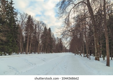park in winter at sunset in Russia