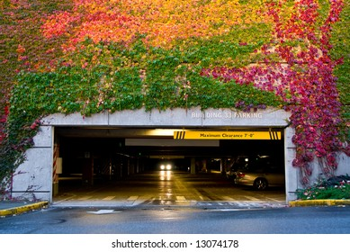 parking garage wall covered with ivy turning colors in the fall
