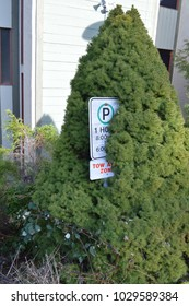 Parking sign being consumed by a shrub