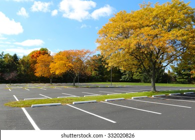 parking lot tree