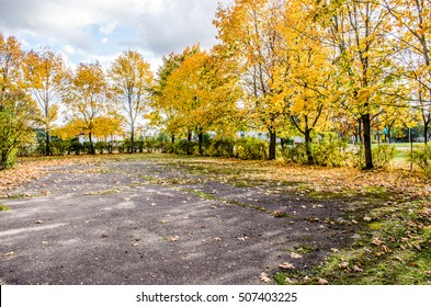 parking lot tree / Winding road curves through colorful autumn trees / paved road in the autumn forest / Asphalt road covered with Autumn trees in a rainy day / Elm tree on the road side in autumn