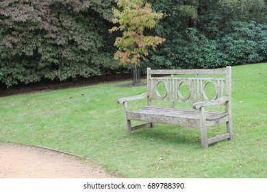 Parkland lawn and path with a wooden bench, orange and light green tree and dark green foliage in the background, no one and no sky