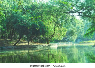 Parks, Forest, plants and green area wonderful landscape in New Delhi India