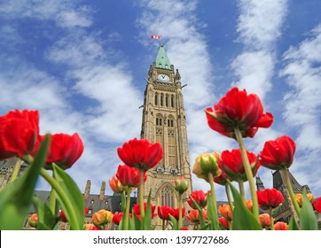 The Parliament of Canada with red tulip flowers in the foreground, Ontario