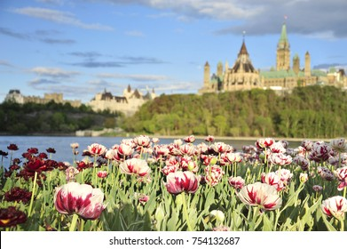 Parliament Hill in Ottawa with tulips from Gatineau