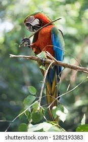 Parque das Aves, Near Iguzau Falls