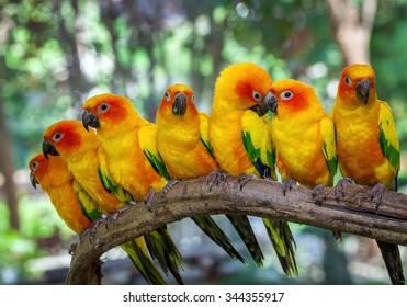 1000 Birds Of Amazon Stock Images Photos Vectors Shutterstock