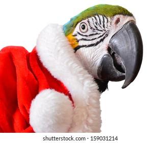 Parrot. Animal Christmas