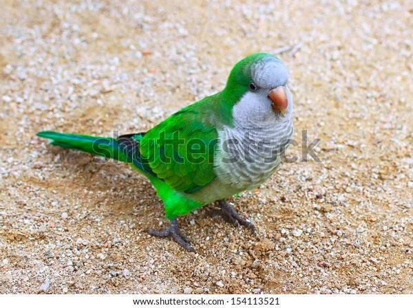 Parrot of Barcelona, Spain.