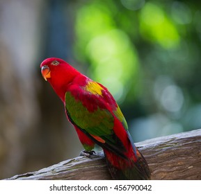 parrot is so beautiful