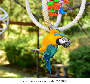 Parrot. Beautiful Parrot playing in an aviary