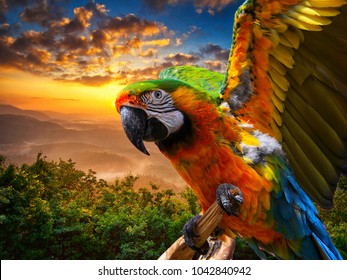 Parrot  bird background