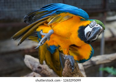 Parrot bird stand by one leg