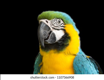 Parrot blue-yellow macaw. Blue-yellow macaw is a very beautiful parrot. Translated from Latin means blue gold. Live in Panama, as well as in Peru and Brazil.