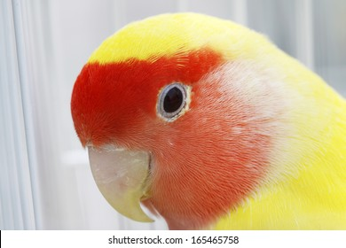parrot in cage, closeup of photo in a zoo