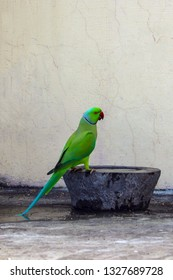 A Parrot came to Drink Water at my house roof top.