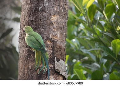 Parrot  was clinging on to a coconut tree to get some sunlight
