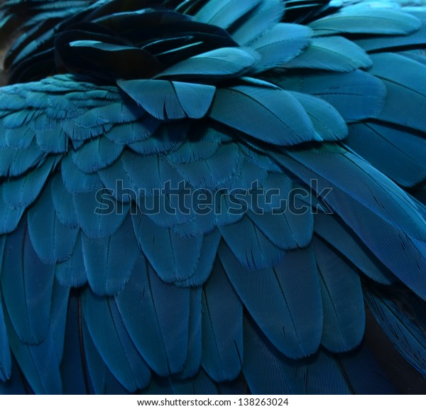 Parrot .Close up of Blue Macaw Feathers