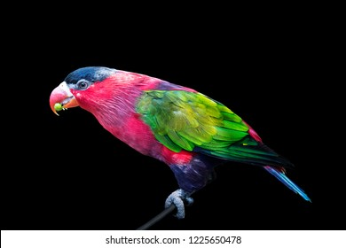 Parrot, colorful bird wildlife isolated background,zoo tropical animal exotic
