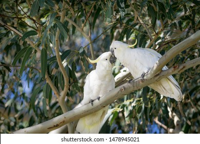 Parrot couple standing on branch of tree