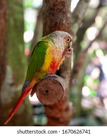 A parrot eats a seed in the park. Bird